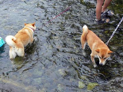 一緒に入水