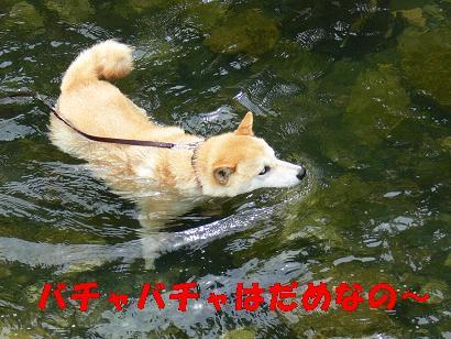 華麗なる泳ぎ