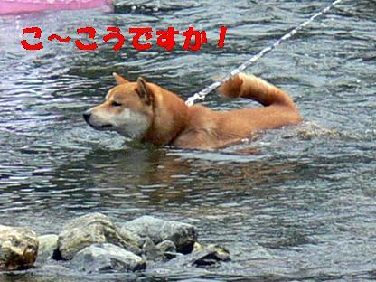 僕も泳げたよ