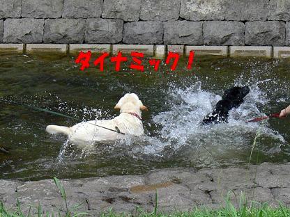 ダイナミックな泳ぎ