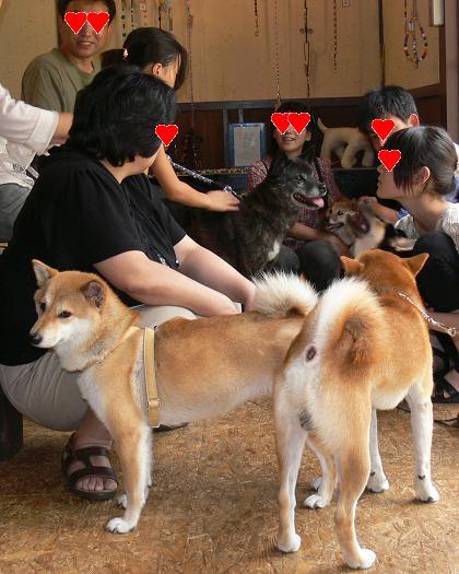 日本犬大集合だー