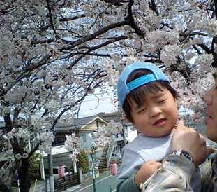 桜にちゅぅ