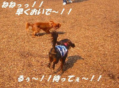 IMG_7932-1.jpg