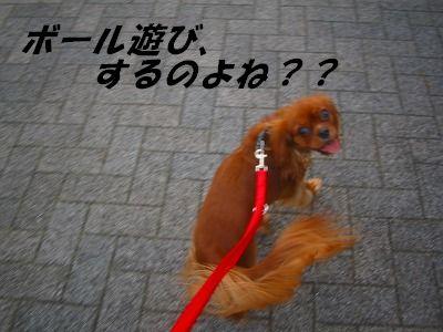 IMG_8138-1.jpg
