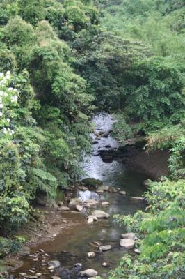 きれいな川よね。