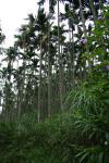 蛍がいたのはこの森です。