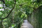 緑がいっぱいの道
