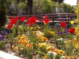 公園のお花畑