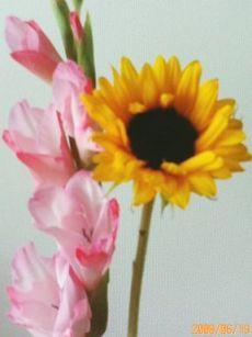 ありがとうございますの花たち 19 2 1