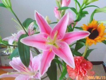 ありがとうございますの花たち 19