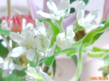 ありがとうございますの花たち 20 3