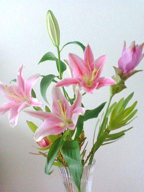 ユリの花たち