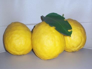 Yちゃんの実家のレモン