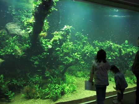 生物園の水槽見学