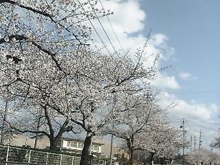 2008 桜 尾張旭. 4
