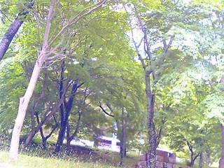 5月26日奥矢作2
