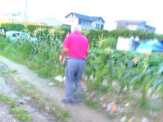 有機野菜畑