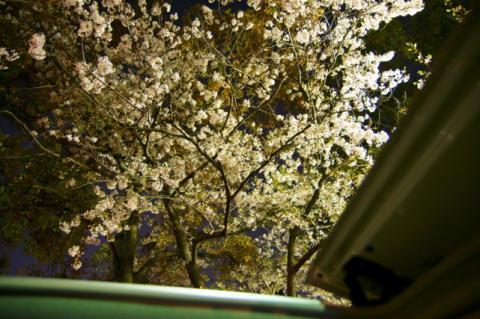 2008 04.12 平和公園の桜 041