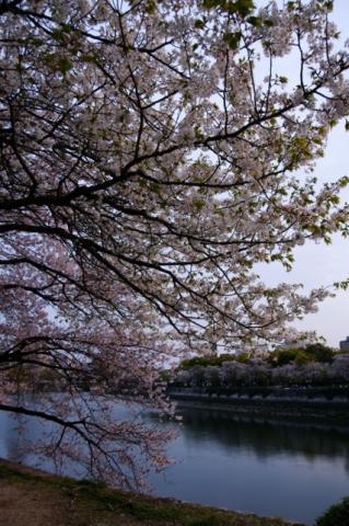 2008 04.12 平和公園の桜 033