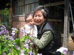 紫大根のお花と