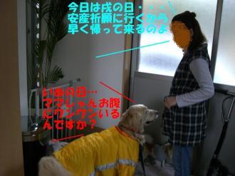 3月23日 神宮 009  BGG