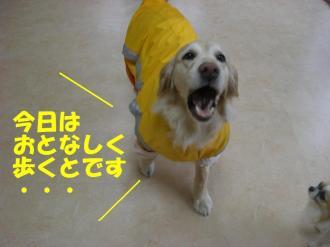 rain  VIVI 001  BGN