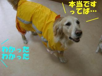 rain  VIVI 002 BG