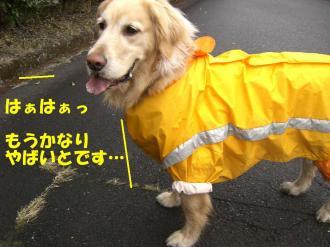rain  VIVI 012  BG