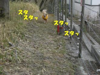 rain  VIVI 014 BG