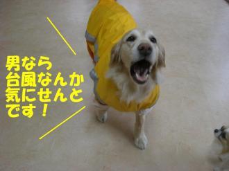 rain  VIVI 001 bg