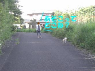 CIMG2176 bg