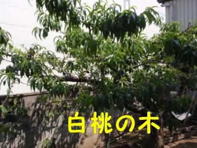P5270583.jpg