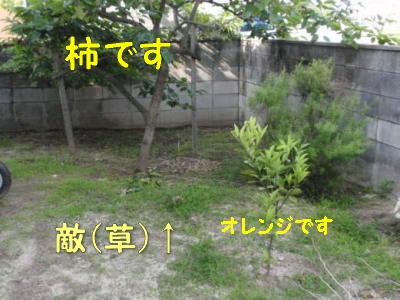 P6120919.jpg