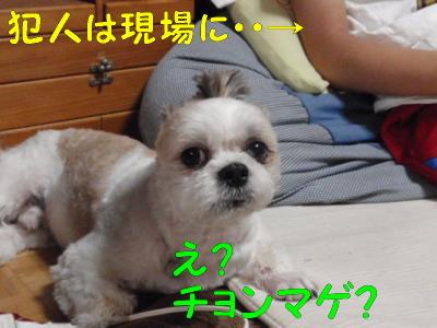 P7050877.jpg