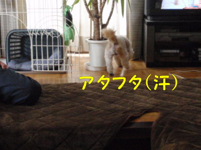 P7060893.jpg
