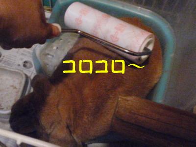 P7140814.jpg