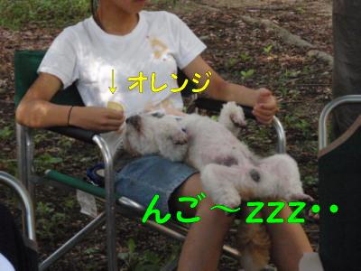 P7200885.jpg