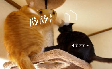 ぷぷとクー のコピー