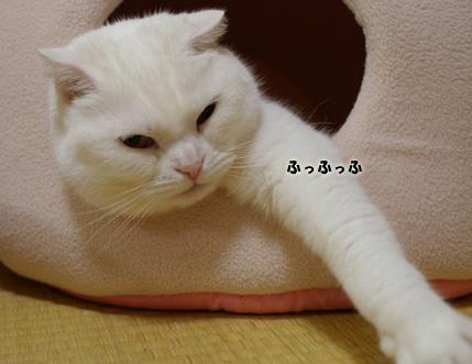 画像 009のコピー