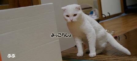 画像 351のコピー