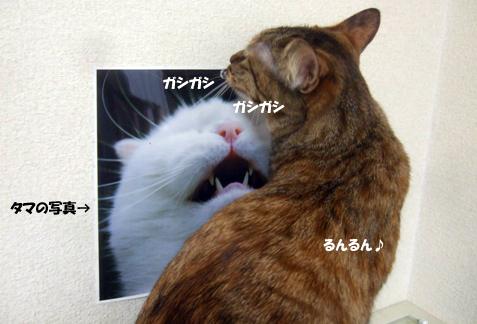 kiraraのコピー