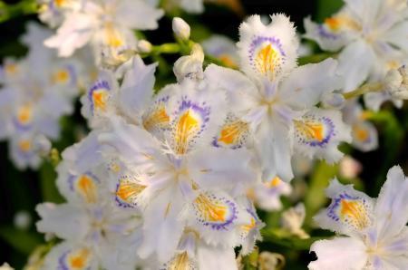 奥三河の花
