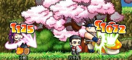 桜を横目に