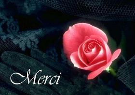 merc.jpg