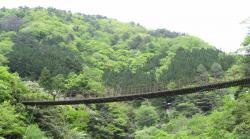 樅木の吊橋1