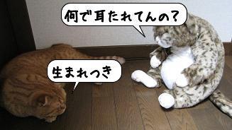 20080516_165516.jpg