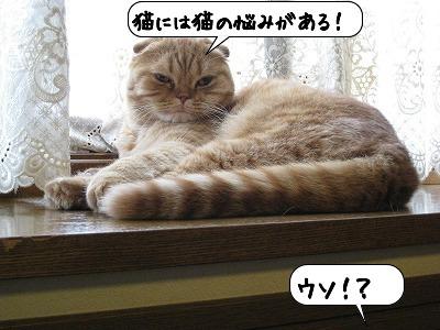 20080605_164633.jpg