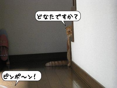 20080701_220138.jpg