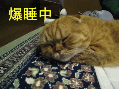 IMG_magu-630001.jpg