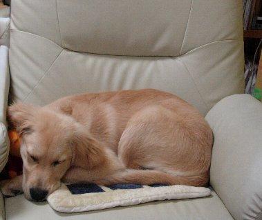 DSCN6052ソファーで寝る